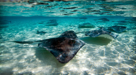Stingray City, Grand Cayman Island